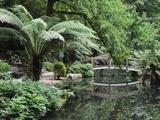 Alfred Nicholas Gardens, Dandenong Ranges National Park, Dandenong Ranges, Victoria, Australia Photographic Print by Jochen Schlenker