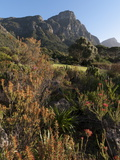 Kirstenbosch National Botanical Garden, Cape Town, South Africa, Africa Lámina fotográfica por Sergio Pitamitz