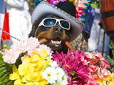 Dog Carrying Flowers at the Carnival in Funchal, Madeira, Portugal, Europe Photographic Print by Michael Runkel