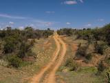 Loisaba Wilderness Conservancy, Laikipia, Kenya, East Africa, Africa Photographic Print by Sergio Pitamitz