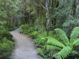 Footpath Through Temperate Rainforest, Nelson River, Tasmania, Australia, Pacific Photographic Print by Jochen Schlenker