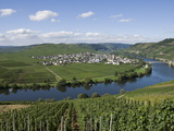 Vineyards Bordering the Banks of the River Mosel, Germany, Europe Photographic Print by James Emmerson