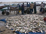 Fish For Sale Laid Out on the Ground at the Fish Market, Nouadhibou, Mauritania, Africa Photographic Print by Michael Runkel