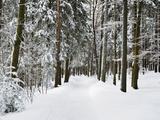 Winter Landscape, Near Koenigsfeld, Black Forest, Baden-Wutttemberg, Germany, Europe Photographic Print by Jochen Schlenker