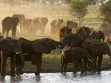 Elephants (Loxodonta Africana), Lualenyi Game Reserve, Kenya, East Africa, Africa Photographic Print by Sergio Pitamitz