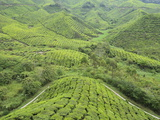 Tea Plantation, Cameron Highlands, Perak, Malaysia, Southeast Asia, Asia Photographic Print by Jochen Schlenker