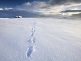Footsteps in Freshly-Fallen Snow Leading Off Into Distance Towards Dramatic Winter Sky, England Photographic Print by Lee Frost