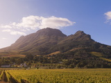 Zorgvliet Wine Estate, Stellenbosch, Cape Province, South Africa, Africa Photographic Print by Sergio Pitamitz