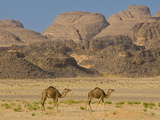 Camels in the Sahara Desert, Tassili N'Ajjer, Algeria, North Africa, Africa Photographic Print by Michael Runkel