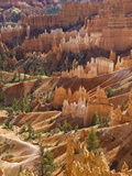 Backlit Sandstone Hoodoos in Bryce Amphitheater, Bryce Canyon National Park, Utah, USA Photographic Print by Neale Clarke