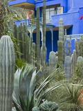 Jardin Majorelle, Marrakech, Morocco, North Africa, Africa Fotografisk tryk af Nico Tondini