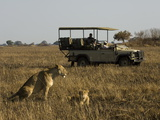 Tourist Taking Pictures of Lioness and Cub, Busanga Plains, Kafue National Park, Zambia, Africa Photographic Print by Sergio Pitamitz