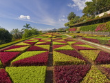Formal Gardens in the Botanical Gardens (Jardim Botanico), Above Funchal, Madeira, Portugal, Europe Photographic Print by Neale Clarke