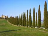 Val D'Orcia, Siena Province, Siena, Tuscany, Italy, Europe Photographic Print by Nico Tondini