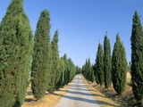 Tree Lined Rural Road, Val D'Orcia, Siena Province, Tuscany, Italy, Europe Photographic Print by Sergio Pitamitz