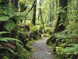 Walkway Through Swamp Forest, Ships Creek, West Coast, South Island, New Zealand, Pacific Fotografisk tryk af Jochen Schlenker