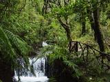 Rainforest, Queimadas, Madeira, Portugal, Atlantic Ocean, Europe Photographic Print by Jochen Schlenker