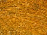 Detail of Hay Bale, Crete Senesi, Siena Province, Tuscany, Italy, Europe Photographic Print by Sergio Pitamitz