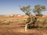 The Breakaways, Painted Desert, Coober Peedy, South Australia, Australia, Pacific Fotografie-Druck von Tony Waltham