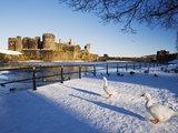 Ducks Walking in the Snow, Caerphilly Castle, Caerphilly, Gwent, Wales, United Kingdom, Europe Photographic Print by Christian Kober