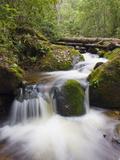 River in Parque Nacional Montana De Celaque, Gracias, Honduras, Central America Photographic Print by Christian Kober