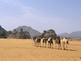 Camel Caravan, Akakus, Sahara Desert, Fezzan, Libya, North Africa, Africa Photographic Print by Sergio Pitamitz
