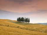 Cypress Trees in Tuscan Field, Val D&#39;Orcia, Siena Province, Tuscany, Italy, Europe Photographic Print by Sergio Pitamitz