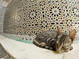 Domestic Cat Sleeping Beside Tiled Mosaics Inside Bou Inania Medersa, Fez, Morocco, North Africa Photographic Print by Guy Edwardes