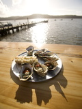 Oysters on Half Shells, California, United States of America, North America Photographic Print by Colin Brynn