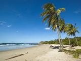 Palm Trees on Playa Guiones Beach, Nosara, Nicoya Peninsula, Guanacaste Province, Costa Rica Photographic Print by Robert Francis
