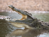 Nile Crocodile (Crocodylus Niloticus), Jaws Agape, Kruger National Park, South Africa, Africa Photographic Print by Ann & Steve Toon