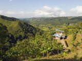 Finca Don Eduardo, Coffee Farm, Salento, Colombia, South America Photographic Print by Christian Kober