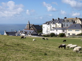 Grazing Sheep, Mortehoe, Devon, England, United Kingdom, Europe Photographic Print by Jeremy Lightfoot