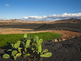 Prickly Pear Cactus and Irrigated Crop Amidst Black Lava Rock, Canary Islands, Spain Photographic Print by Robert Francis