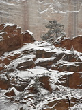 Fresh Snow on a Red Rock Cliff and Evergreens, Zion National Park, Utah, USA Photographic Print by James Hager