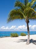 Beach at Chankanaab Park, Isla De Cozumel, Cozumel, Off the Yucatan, Mexico Photographic Print by Michael DeFreitas