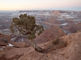 Juniper at the Edge of the Mesa in the Winter With Snow, Dead Horse State Park, Utah, USA Photographic Print by James Hager