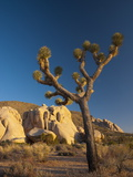 Joshua Tree National Park, California, USA Photographic Print by Alan Copson