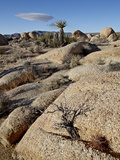 Typical Landscape, Joshua Tree National Park, California, United States of America, North America Photographic Print by James Hager