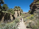 Hiking in Andreas Canyon, Indian Canyons, Palm Springs, California, USA Photographic Print by Michael DeFreitas