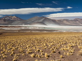 Salar De Talar, Atacama Desert, Chile, South America Photographic Print by Sergio Pitamitz