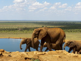 Elephants (Loxodonta Africana) at Water Hole, Tsavo East National Park, Kenya, East Africa, Africa Photographic Print by Sergio Pitamitz