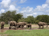 Elephant Herd, Kruger National Park, South Africa, Africa Fotografisk tryk af Ann & Steve Toon