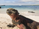 Marine Iguana (Amblyrhynchus Cristatus), Suarez Point, Isla Espanola, Galapagos Islands Photographic Print by Michael DeFreitas