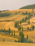 Cypress Trees Along Rural Road Near Pienza, Val D'Orica, Siena Province, Tuscany, Italy, Europe Photographic Print by Sergio Pitamitz