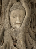 Wat Maha That, Ayutthaya, Ayutthaya Province, Thailand, Southeast Asia, Asia Photographic Print by Michael Snell