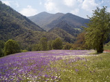 Spring Flowers, Cantabria, Spain, Europe Photographic Print