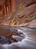 Cascade and Tree in the Fall, the Narrows of the Virgin River, Zion National Park, Utah, USA Photographic Print