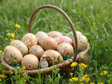 Easter Eggs in a Basket, Haute-Savoie, France, Europe Photographic Print
