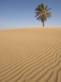 Lone Tree on Dune, Sahara Desert, Merzouga, Morocco, North Africa, Africa Photographic Print by Kim Walker